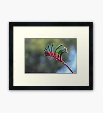 Red and Green Kangaroo Paw Framed Print