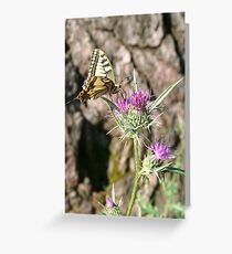 Scarce Swallowtail Butterfly and Thistle Greeting Card