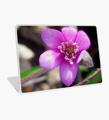 First Hepatica of the season  Laptop Skin