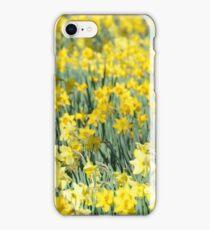 Daffodil panorama iPhone Case/Skin