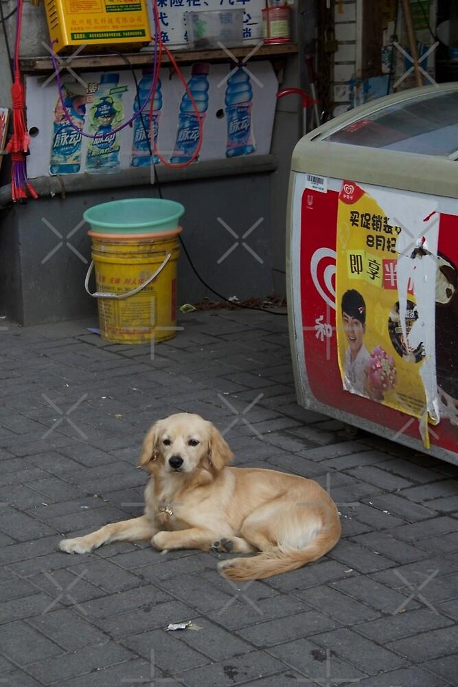A puppy in Shanghai by Raquel Fletcher