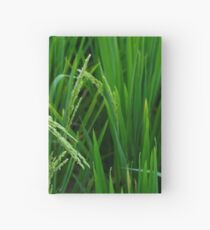 Looking for rice Hardcover Journal
