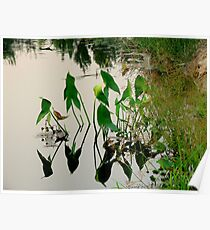 Irrigation Reflections Poster