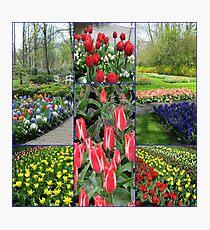 Keukenhof Collage featuring Pinocchio Tulips Photographic Print
