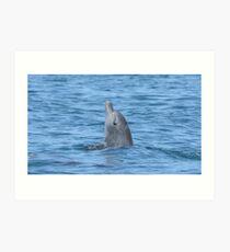 Bottlenose dolphin spy-hop Art Print