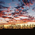 Coonawarra Sunset by Jason Langer