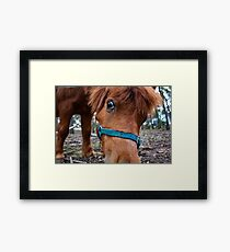 The Great Equine Detective Framed Print