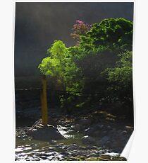 morning at the river cuale - mañana en el rio cuale Poster