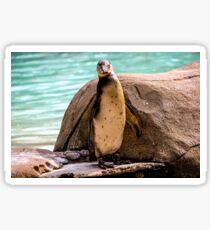 Poser Penguin Sticker