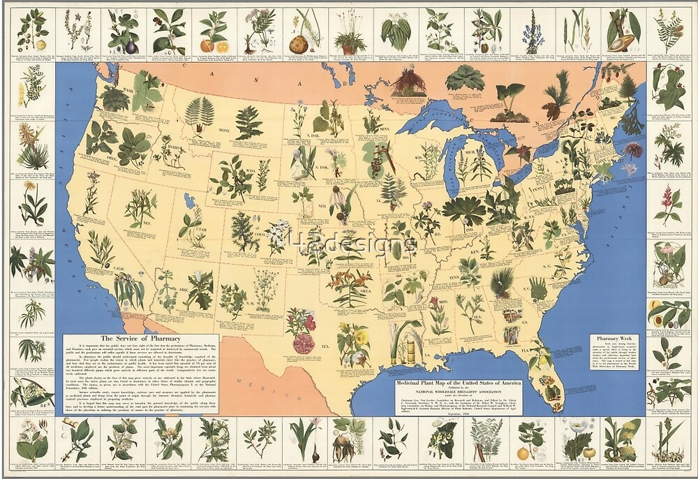 1932 Medicinal Plant Map of the United States. Amazing map of 'Herbal Cures' by 42designs