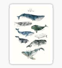 Whales Sticker