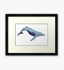 The lonely blue whale Framed Print