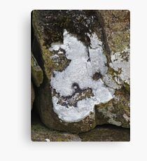 The Lichen of the Baskervilles Canvas Print