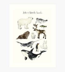 Arctic & Antarctic Animals Art Print