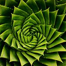 Spiral by Gareth Bowell