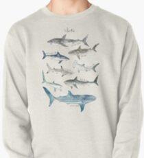 Sharks Pullover