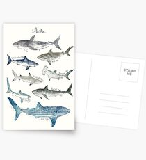 Sharks Postcards