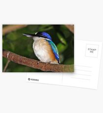 Forest Kingfisher  Postcards