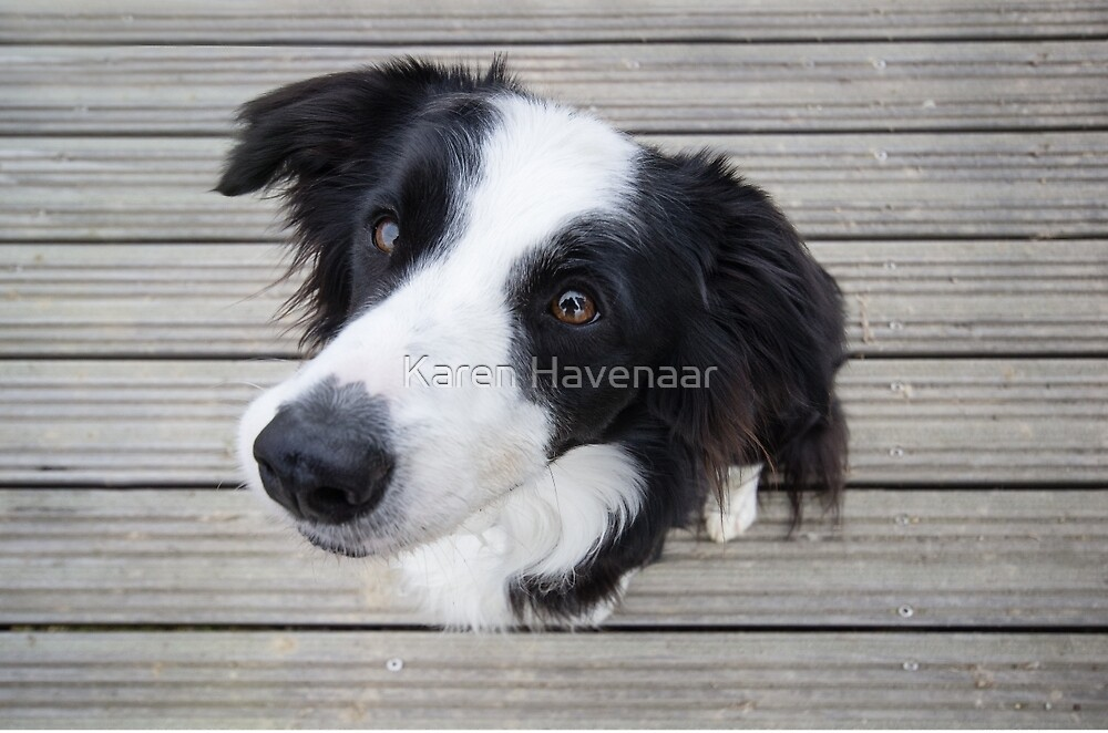 Mila on the Deck by Karen Havenaar