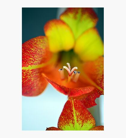 Sword Lilly Photographic Print