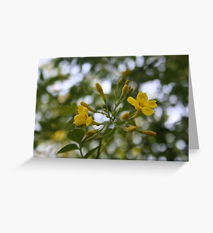 Shaded Carolina Jessamine Greeting Card