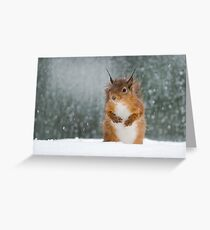 Red Squirrel in the Snow Greeting Card