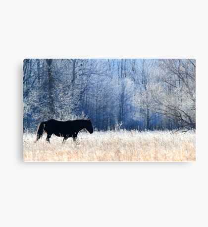 Horse and Owl Canvas Print