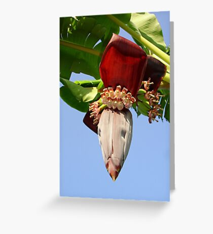Four Banana's Make A Bunch Greeting Card