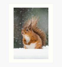 Cute Red Squirrel Art Print
