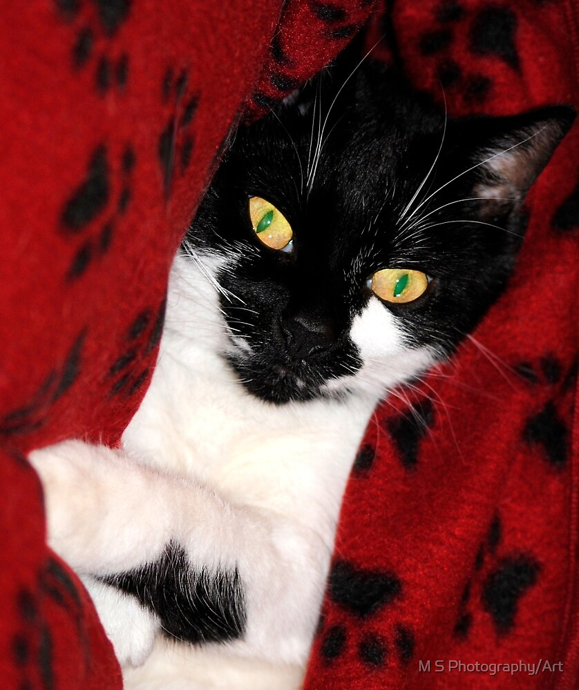 Black & White Cat by M S Photography/Art