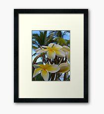 tropical zone - zona tropical Framed Print