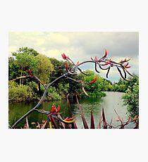 Landscape | The River | Dublin, Ireland Photographic Print