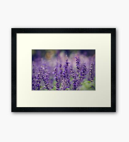 Lovely Lavender Framed Print