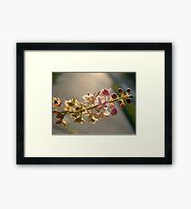 PIGEONBERRY Framed Print