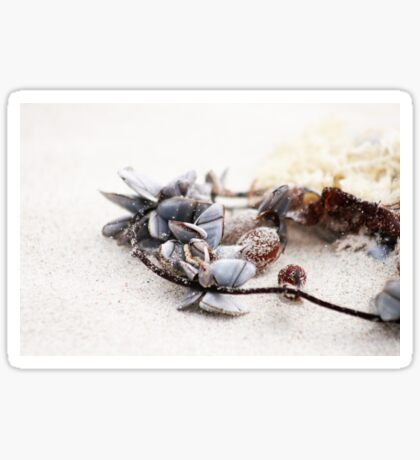 Shell Necklace Sticker