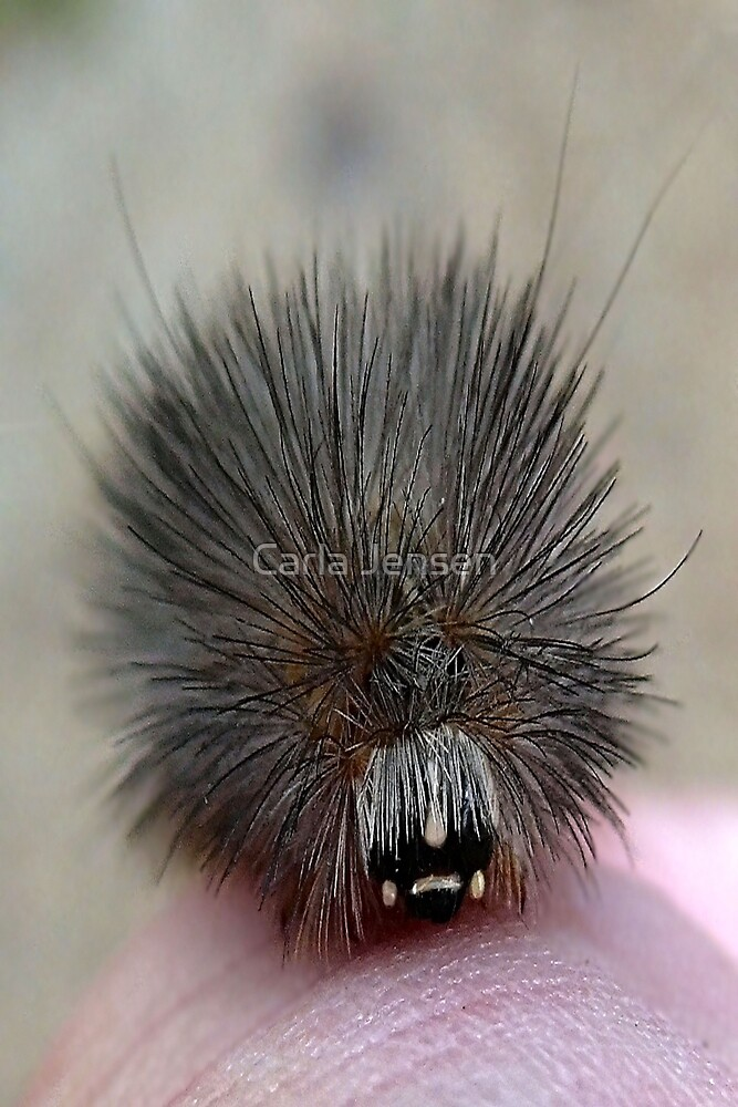 The Shaggy Caterpillar by Carla Jensen