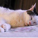Munchkin Sleeping ♥ by Heather Friedman