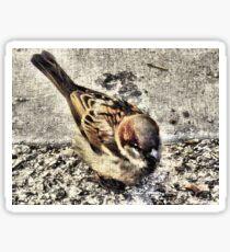 A Little Brown Birdy    Sticker
