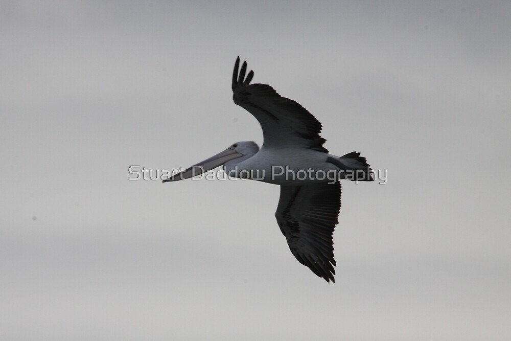 Soaring in the Wind by Stuart Daddow Photography