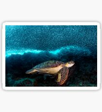 Turtle and Sardines Sticker