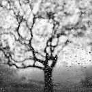 Baum Silhouette von Marianna Tankelevich