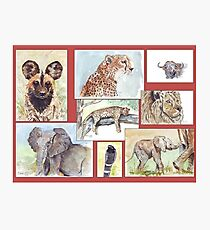 South African Wildlife collection Photographic Print