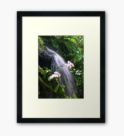 Orchids Waterfall Paradise Framed Print