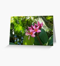 Tropical Paradise - Fragrant, Hot Pink Plumeria in a Lush Garden Greeting Card