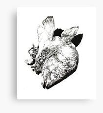Natural History - Fish Canvas Print