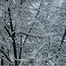Winter's maze by Ana Belaj