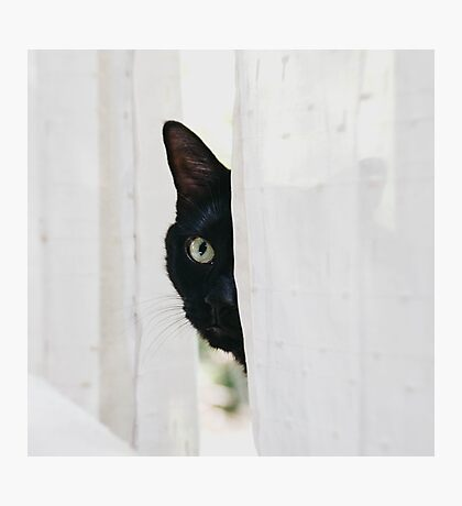 The Bear Cat Photographic Print