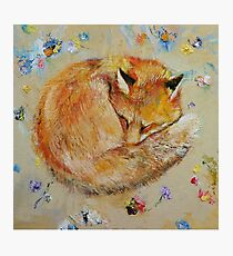Sleeping Fox Photographic Print