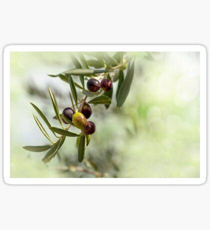 Ripe Olives Branch Sticker