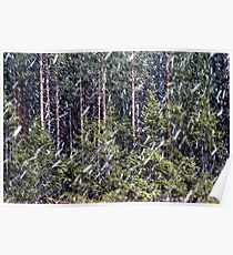 1.5.2014: Sleet in Coniferous Forest Poster